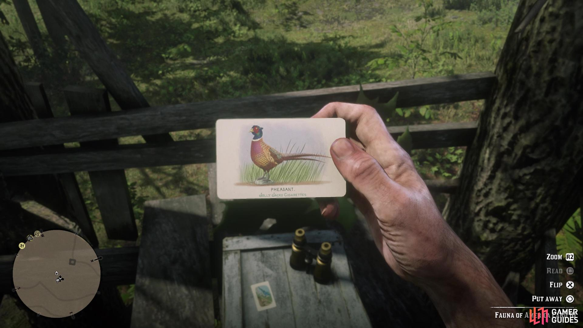 The Pheasant card is found in the same spot as the Blue Jay card