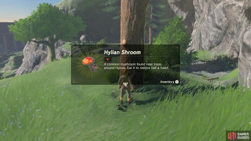 The Hylian Shroom is a basic and common item that if cooked can restore even more hearts.