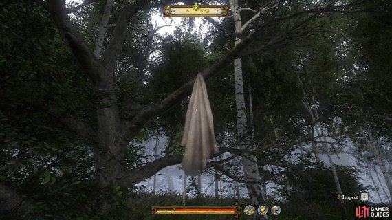 The clothing item can be found hanging from a tree near to where you found the horse.