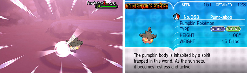 Pumpkaboo come in different sizes; the bigger the better.