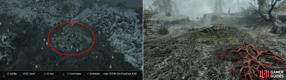 The hot springs south of Windhelm is a treasure trove of alchemical ingredients (left), including Creep Clusters, Jazbay Grapes and Dragon's Breath (right).
